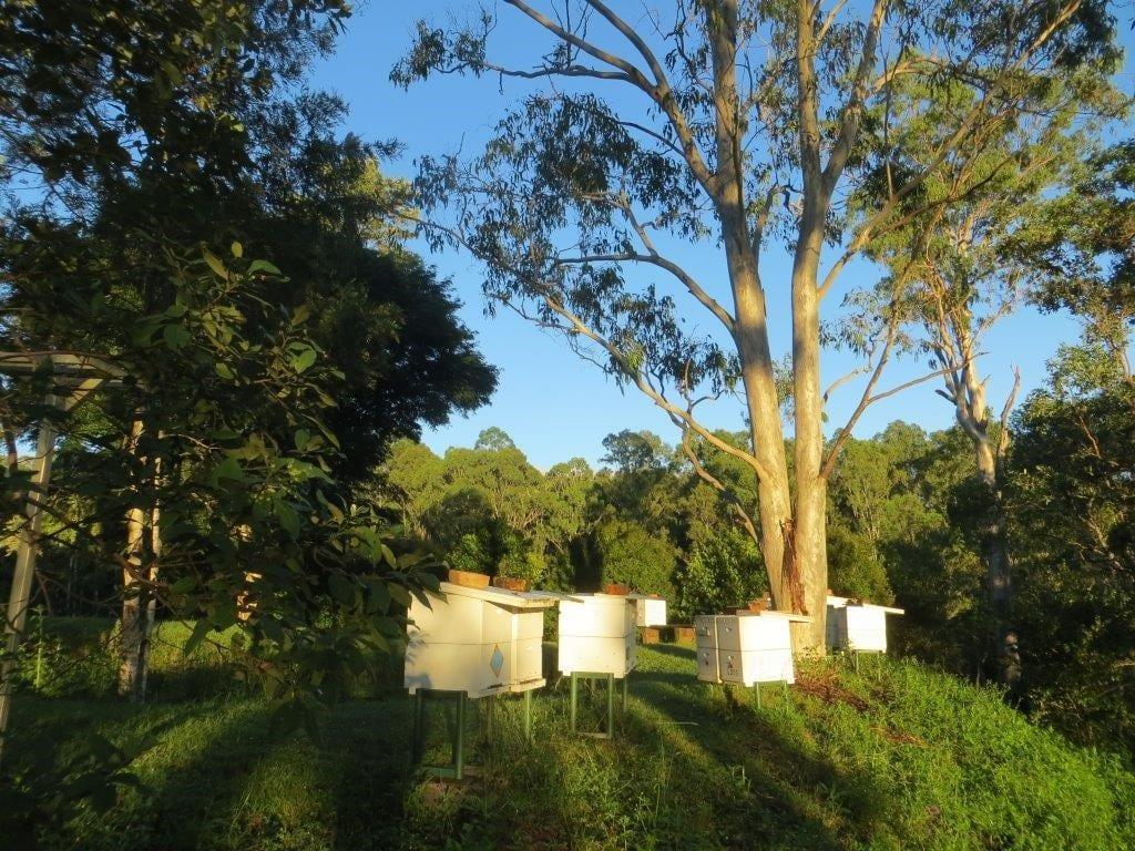 Honey | Permaculture | Max and Trudi Lindegger