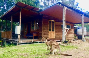 Airbnb Accomodation | Crystal Waters Cottage | Paddy